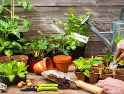 Begini Cara Memulai Berkebun Sayur di Dalam Rumah Untuk Pemula