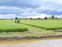 Teknologi RAISA Balitbangtan Ubah Kebiasaan Petani Lahan Rawa Kalteng Jadi Lebih Modern