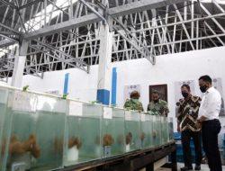 Pemkab Bantaeng Kolaborasi dengan BPBL Ambon Kembangkan Rumput Laut dan Ikan Hias