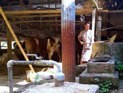 Kisah Pemanfaatan Limbah Ternak di Pinrang, dari Keluhan Warga hingga Biogas Gratis untuk Tetangga