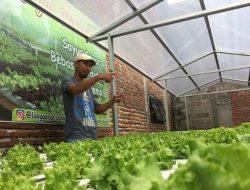 Masyarakat Sadar Kesehatan, Permintaan Sayuran Hidroponik Kediri Semakin Tinggi