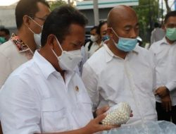 6.304 Butir Biji Mutiara Asal Lombok Diekspor ke Tiongkok