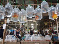 Semakin Booming, Nilai Transaksi di Pasar Ikan Hias Parung Capai 5 Miliar dalam Sehari