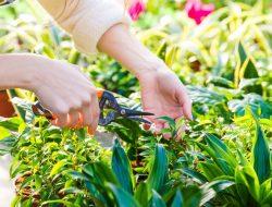 Jangan Hanya Disiram, Lakukan 5 Langkah Ini Agar Tanaman Hias Tumbuh Subur