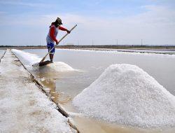 Jerit Petambak di Tengah Rencana Impor Garam Terbesar Sepanjang Sejarah Indonesia