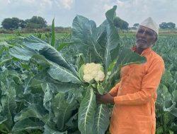 Begini Cara Petani India Tingkatkan Panen dan Atasi Kelangkaan Air