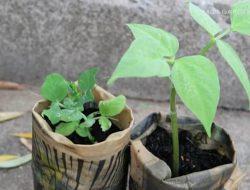 Punya Kertas Bekas Di Rumah? Yuk Jadikan Pot untuk tanamanmu