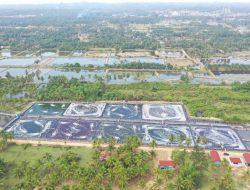 Aceh Timur Mulai Panen Parsial Udang dari Tambak Klaster 2020
