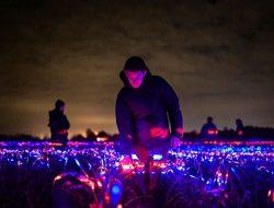 Tebaran Cahaya Ultraviolet, Cara Seniman Belanda Tumbuhkan Tanaman Lebih Cepat