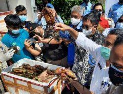 Balikpapan Ekspor Perdana Kepiting Bakau ke Tiongkok