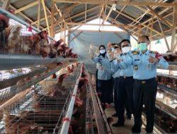 Inovasi Lapas di Bengkulu, Usaha Ternak Ayam & Lele untuk Asah Keterampilan WBP