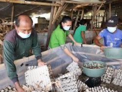 Terdampak Pendemi, Agen Asuransi Ini Pilih Nyambi Beternak Jangkrik