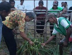 UPT Peternakan NTT Libatkan 5 Desa Kawasan Besipae Kembangkan Pakan Hijauan