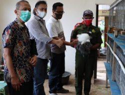 Budidaya Kelinci Pedaging Dinilai Mampu Angkat PAD Sektor Peternakan Jateng