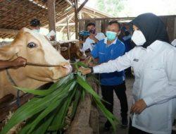 Puskeswan Banyuwangi Berkeliling Beri Pemeriksaan Gratis kepada Hewan Ternak