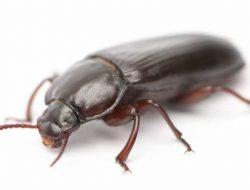 Terdampak Pandemi? 4 Bisnis Ternak Serangga Ini Bisa Dicoba, Omzetnya Gak Main-main