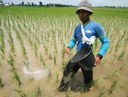 Tim Dosen Unsoed Buat Inovasi Pupuk, Harapkan Petani Mudah Peroleh, Efisien & Ramah Lingkungan