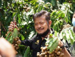 Selain Candi Borobudur, Kabupaten Magelang Punya Kawasan Agrowisata Kebun Kelengkeng