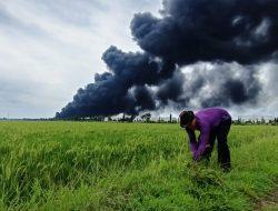 Aksi Peternak Tetap Cari Pakan Rumput di Seberang Kebakaran Tangki Pertamina