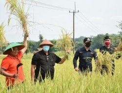 Sektor Pertanian Masuk Skala Prioritas, Pemprov Jabar Tingkatkan Produksi Pangan