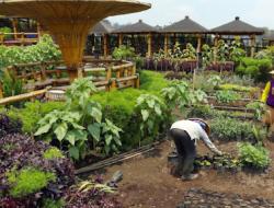 Mentan SYL Upayakan Optimalisasi Lahan Rawa hingga Pekarangan untuk Pertanian