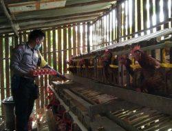 Inovasi di Tengah Pandemi, Bripka Dirhamsyah Beternak Ayam Petelur dan Madu Kelulut
