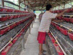 Mantan PNS Beternak 25 Ribu Ekor Puyuh, Pernah Rugi Rp280 Juta Kini Suplai Kebutuhan Banten