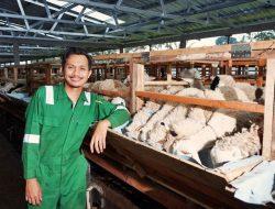Rahman Peternak Milenial, Alumni Teknik yang Kini Berprofesi sebagai Peternak Kambing