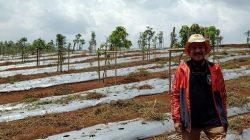 Eks Wakil Bupati Bandung Barat Pilih Terjun di Bisnis Pertanian