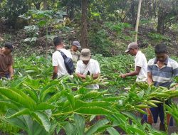Dahlan Iskan Berguru Langsung ke Marnianto, Petani Porang Asal Ponorogo