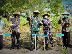 Berhasil Wujudkan Program Ketahanan Pangan, TNI AL Kulonprogo Panen Sayuran dan Ketela Pohon