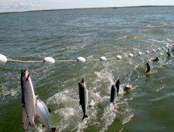 Mengenal 8 Jenis Alat Penangkap Ikan yang Direkomendasikan FAO