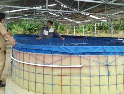 Bantuan Budidaya Ikan untuk Pesantren di Kabupaten Sinjai Mendapat Hasil Memuaskan