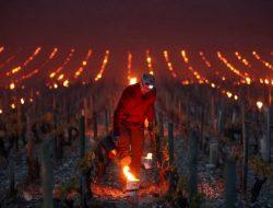 Bukan Untuk Ngepet, Lilin Ini Untuk Selamatkan Tanaman Anggur di Prancis
