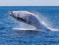 Punya Manfaat Penting, Ini 5 Fakta Menarik dari Kotoran Hewan Laut