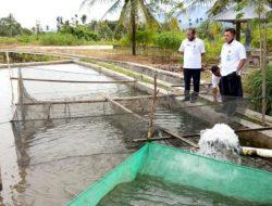 Kabupaten Pasaman Akan Jadi Sentra Produksi Ikan Mas di Sumatera Barat