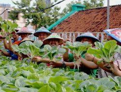 4 Cara Efektif Memanfaatkan Lahan Sempit Untuk Bertani