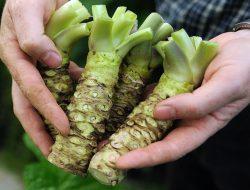 Wasabi, Warisan Penting di Pertanian Jepang