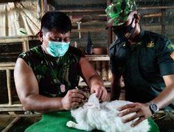 Inspiratif! Serka Eko, Anggota Babinsa yang Sukses Beternak Kelinci