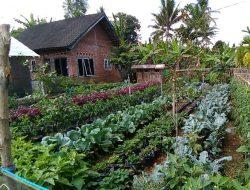 Program Pertanian Keluarga, BKP Kementan: Upaya Strategis Ketahanan Pangan Nasional