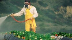 Ini Dia, Sayur dan Buah yang Paling Banyak Mengandung Residu Pestisida