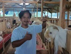 Pemuda Ini Pilih Beternak Kambing daripada Jadi Pegawai BUMN, Perbulan Rp30 Juta