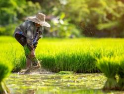 Petani Harus Dilindungi dari Impor Beras, Mengapa?