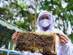 Perhimpunan Entomologi Indonesia: Populasi Lebah di Sumatera Merosot