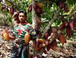 Manfaatkan KUR Pertanian, Petani Kakao diharapkan Mampu Maksimalkan Hasil Pertanian