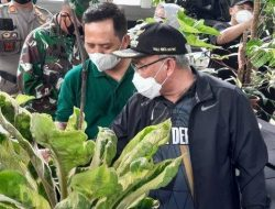 Tren Tanaman Hias di Depok, Walikota: Sejalan dengan Program Urban Farming