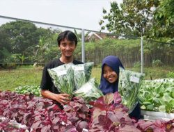 Inspiratif, Pasangan Muda Kembangkan Sayuran Hidroponik