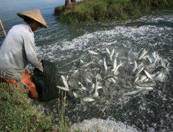 Mengenal 5 Jenis Ikan Air Payau yang Sering Dibudidayakan