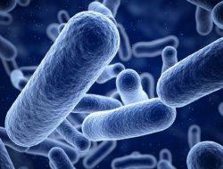 Makanan Siap Saji Bisa Mengandung Bakteri Staphylococcus Aureus, Ini Risikonya