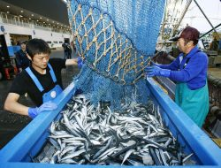 Hasil Tangkapan Ikan di Jepang Terus Menurun, Ini Penyebabnya
